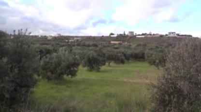 olijfbomen van natuurvriendelijke producent BeCollective