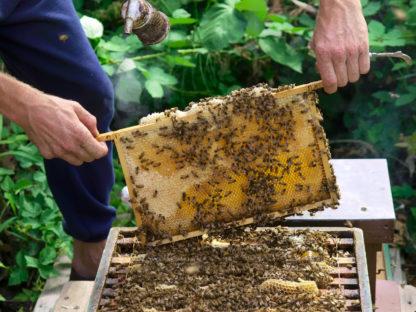 lokale amsterdamse honingproductie