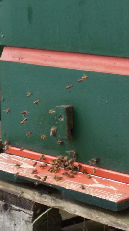 lokale amsterdamse bijen maken honing