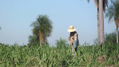 fair trade biologisch en democratisch